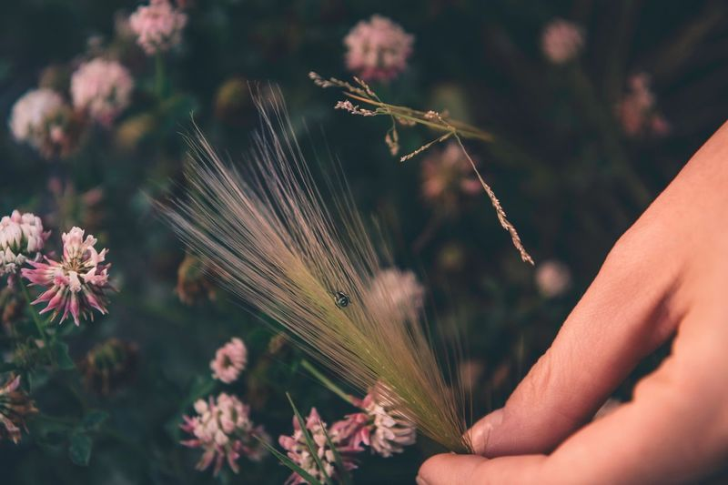 Human Hand Hand Human Body Part Plant One Person Nature Close-up Focus On Foreground Growth Beauty In Nature Body Part Finger Women Real People Personal Perspective Flower Outdoors