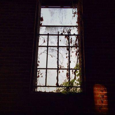 Old Vintage Abandoned Shack Creepy Vacant Classic Haunted Ruins Scary Ruin Closed Dilapidated Overgrown Louisiana South Condemned Sketchy Urbanexploring Trailblazers_rurex BatonRouge Window_filth OutcastAmerica Oldsouth Onlylouisiana Louisianatravel Abandonedlouisiana Brusly