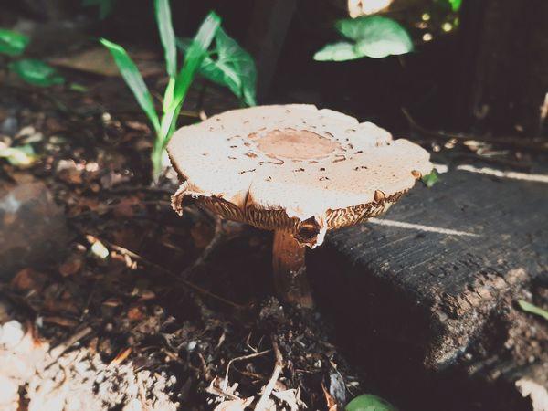😃😃😃 HONGO😀😀😀 Eyem Best Shots Nature_collection Eyempictures Eyemphotography EyeEm Nature Lover Hongo En Madera Hongo Naturaleza Toadstool Fungus Close-up