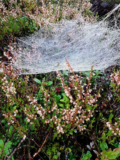 Flowers Spider Web Close-up Beauty In Nature Day Outdoors No People Forest Nature