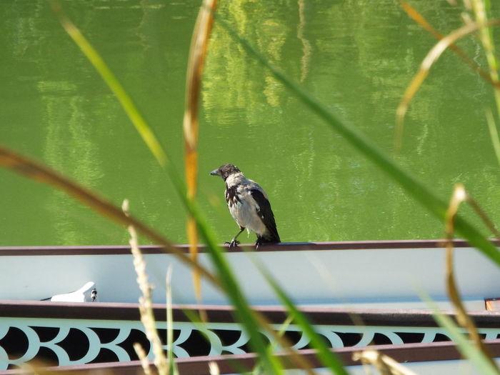 Bird perching on a fence