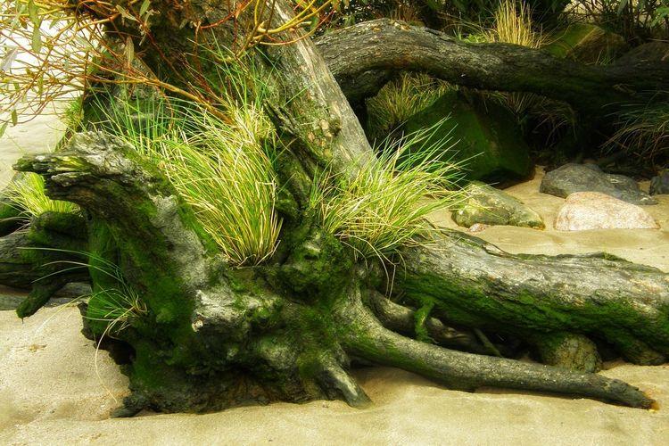 Beach Sand Tree