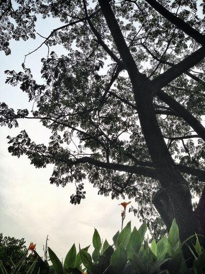 Nature Trees Tree EyeEm Nature Lover