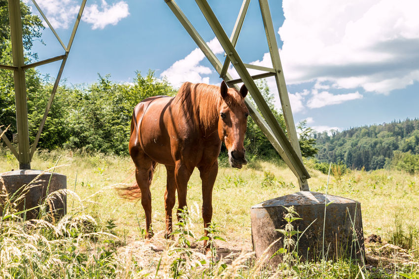 Horses on the green meadow Animal Animal Themes Animal Wildlife Day Domestic Domestic Animals Field Grass Herbivorous Horse Land Livestock Mammal Nature No People One Animal Outdoors Pets Plant Ranch Sky Standing Tree Vertebrate