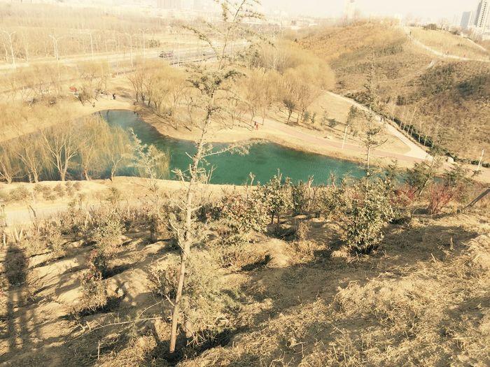 Lake Dark Green