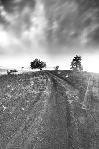 The pathway reaches the tree on the hill. Cloud - Sky Sky Tree Direction Road The Way Forward Environment Plant Nature Landscape Transportation No People Land Tranquility Tranquil Scene Beauty In Nature Day Scenics - Nature Field Diminishing Perspective Outdoors Black & White Black And White Minimalism Sunrays