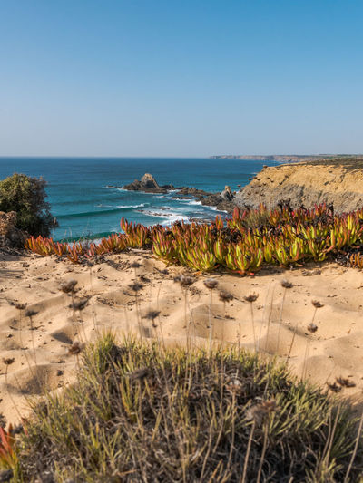 Grass Growth Land Low Angle View Nature Ocean View Plant Portugal Tranquility Travel Travel Photography Traveling Beauty In Nature Cavaleiro Cliff No People Ocean Sand Scenics Scenics - Nature Sea Seascape Tranquil Scene Travel Destinations Water