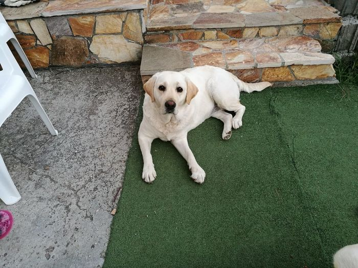 Portrait of dog sitting on carpet