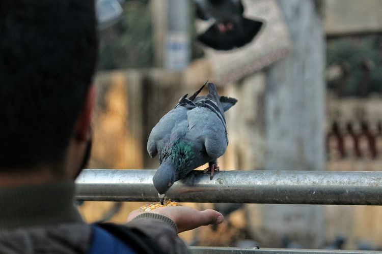 feed is must Focus On Foreground Bird One Animal Holding Animal Themes Perching Outdoors Human Hand Close-up