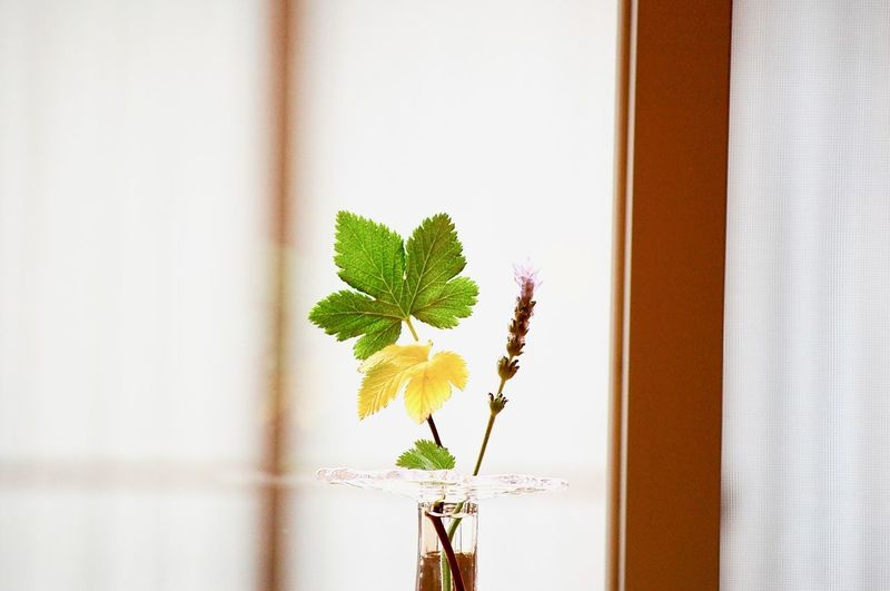 Close-up of plant on window sill at home