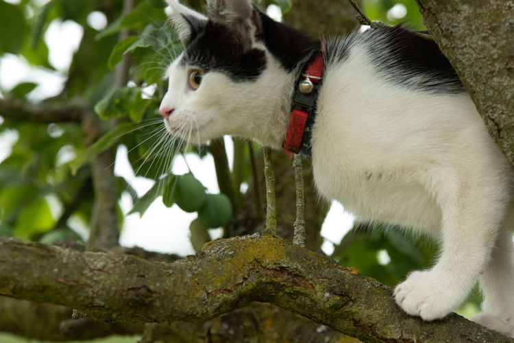 Mammal Animal Themes Animal One Animal Domestic Animals Vertebrate Domestic Pets Tree Cat Feline Focus On Foreground Plant Domestic Cat Branch Looking No People Collar Close-up Pet Collar Whisker Animal Head