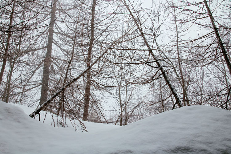 Loneliness Snow ❄ Weather Bare Tree Beauty In Nature Branch Cold Days Cold Temperature Environment Extreme Weather Landscape Nature No People Non-urban Scene Outdoors Plant Scenics - Nature Snow Snowcapped Mountain Snowing Tranquility Tree Trees And Nature White Color Winter