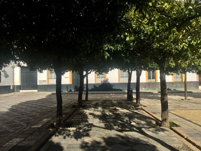 Tree Growth Sunlight Shadow Nature Outdoors The Graphic City City No People Day
