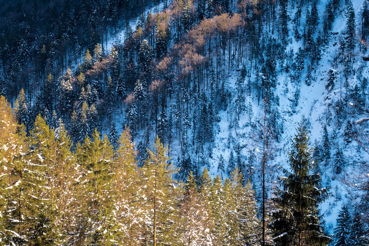 Slovenia Alps Beauty In Nature Cold Temperature Day Forest Growth Landscape Mountain Nature No People Outdoors Pinaceae Pine Tree Scenics Sky Snow Spruce Tree Tranquil Scene Tranquility Tree Winter