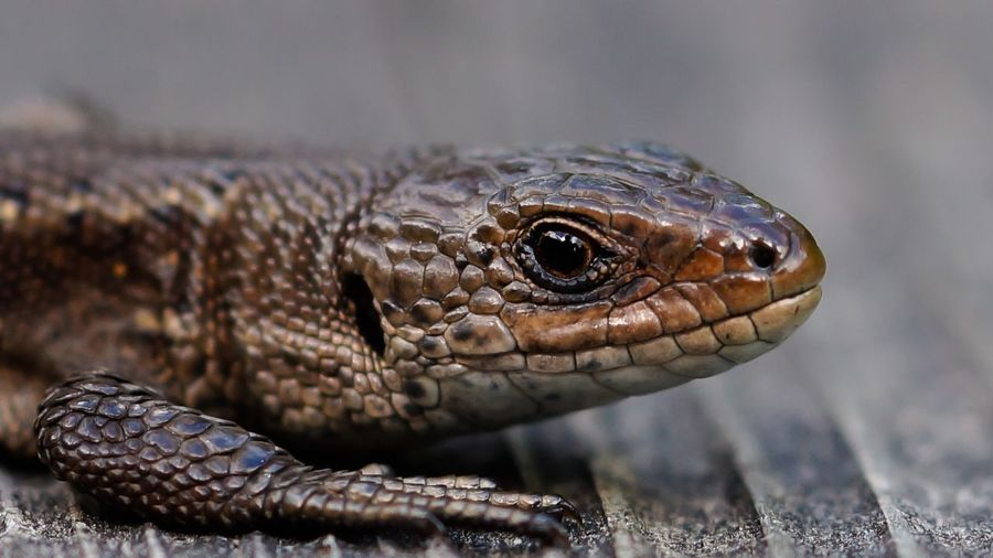 Close-up side view of a reptile
