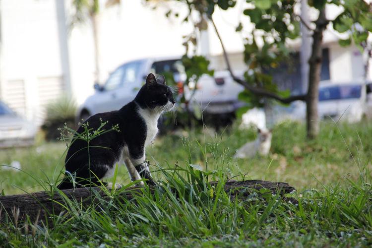 Gato De Rua Gatoderua Gato Gatos Gato😽 Animais Abandonados Animais De Rua. Animaisderua Animais Animais.