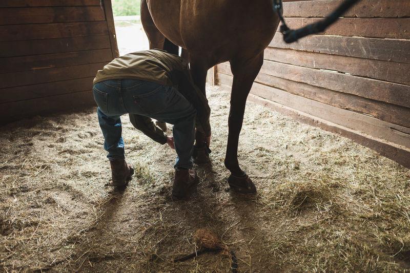 Senior man bending by horse on hay in barn