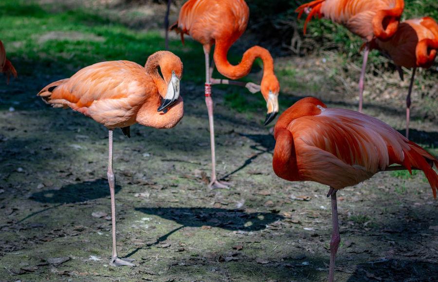 group of flamingos Long Legs Legs Thin Zoo Zoo Rostock Tall Skinny Flamingo Bird Water Portrait Close-up Crane - Bird Animal Neck Tropical Bird Group Of Animals Freshwater Bird