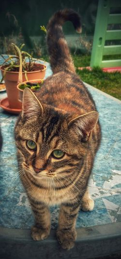 Ma fille ??? Chat Cat Playing With The Animals First Eyeem Photo Taking Photos HDR Nature Animal Ma Boule De Poil