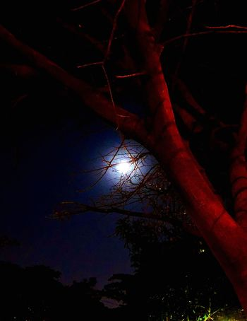 Tree Night Tranquility Nature Outdoors Tranquil Scene Low Angle View