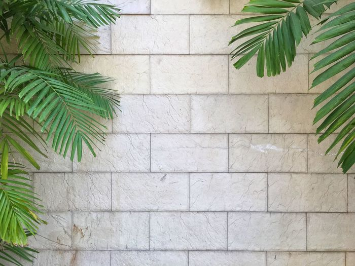Close-up of palm tree by wall