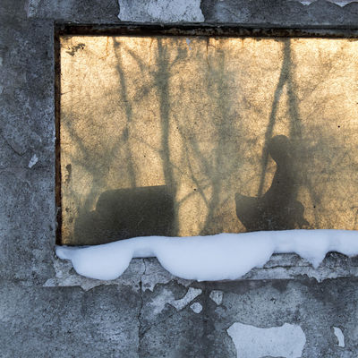 Wintertime Shades Of Winter Shadows & Lights Snow ❄ Wall Winter Wintertime Architecture Axvo Blue Branch Close-up Cold Cold Temperature Day Duck No People Outdoors Shadow Shadows Snow Sun Textured  Windows Yellow