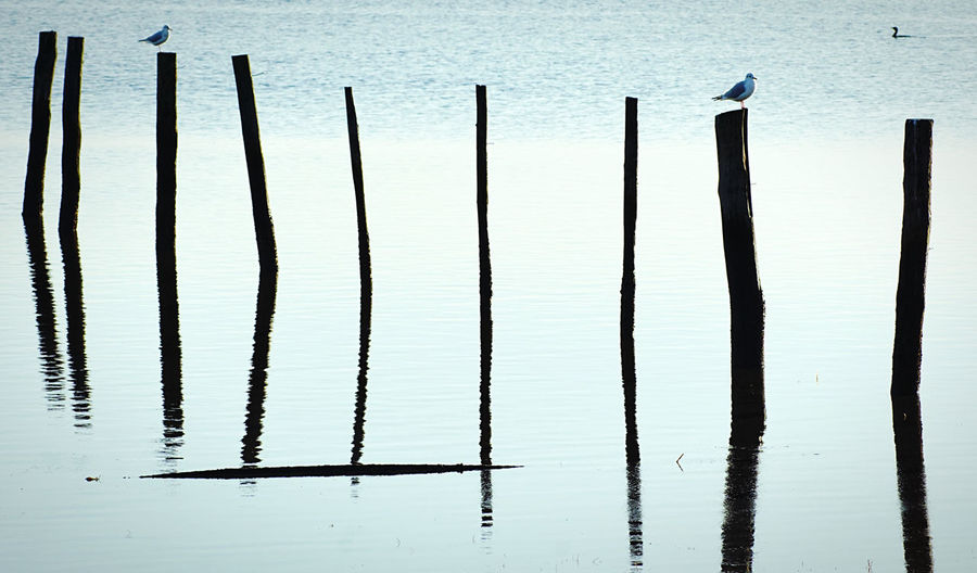 High angle view of silhouette wooden posts in lake