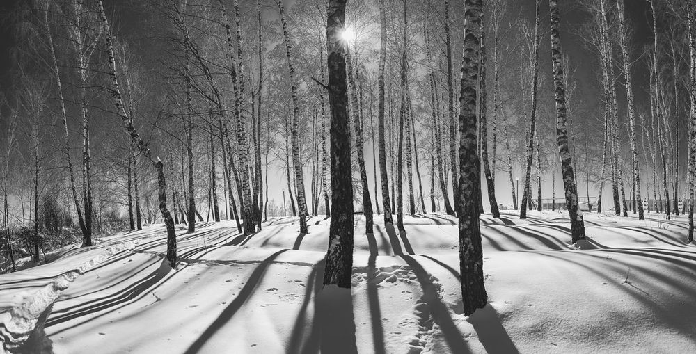 Winter Woodland Monochrome Wonderland Winter Forest Winter Nature Outside Belarus Nature Shades of Winter Shadows And Light Tree Snow Cold Temperature Winter Shadow Sky Tree Trunk Bare Tree Dead Plant Deep Snow Woods Fallen Tree Snow Covered Dead Tree Snowcapped Lone Countryside Treelined