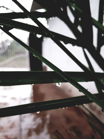 water droplets Waterdrops Rainy Days Leaves Garden Photography Tree Shadow Close-up Plant Life Growing