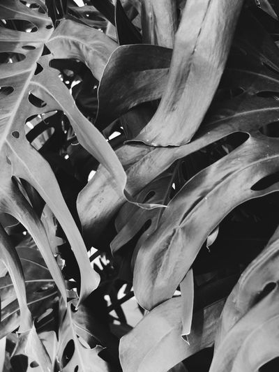 Plants Monochrome Minimalism Bw_collection Blackandwhite VSCO Vscocam Leafs Pattern, Texture, Shape And Form Shades Of Grey