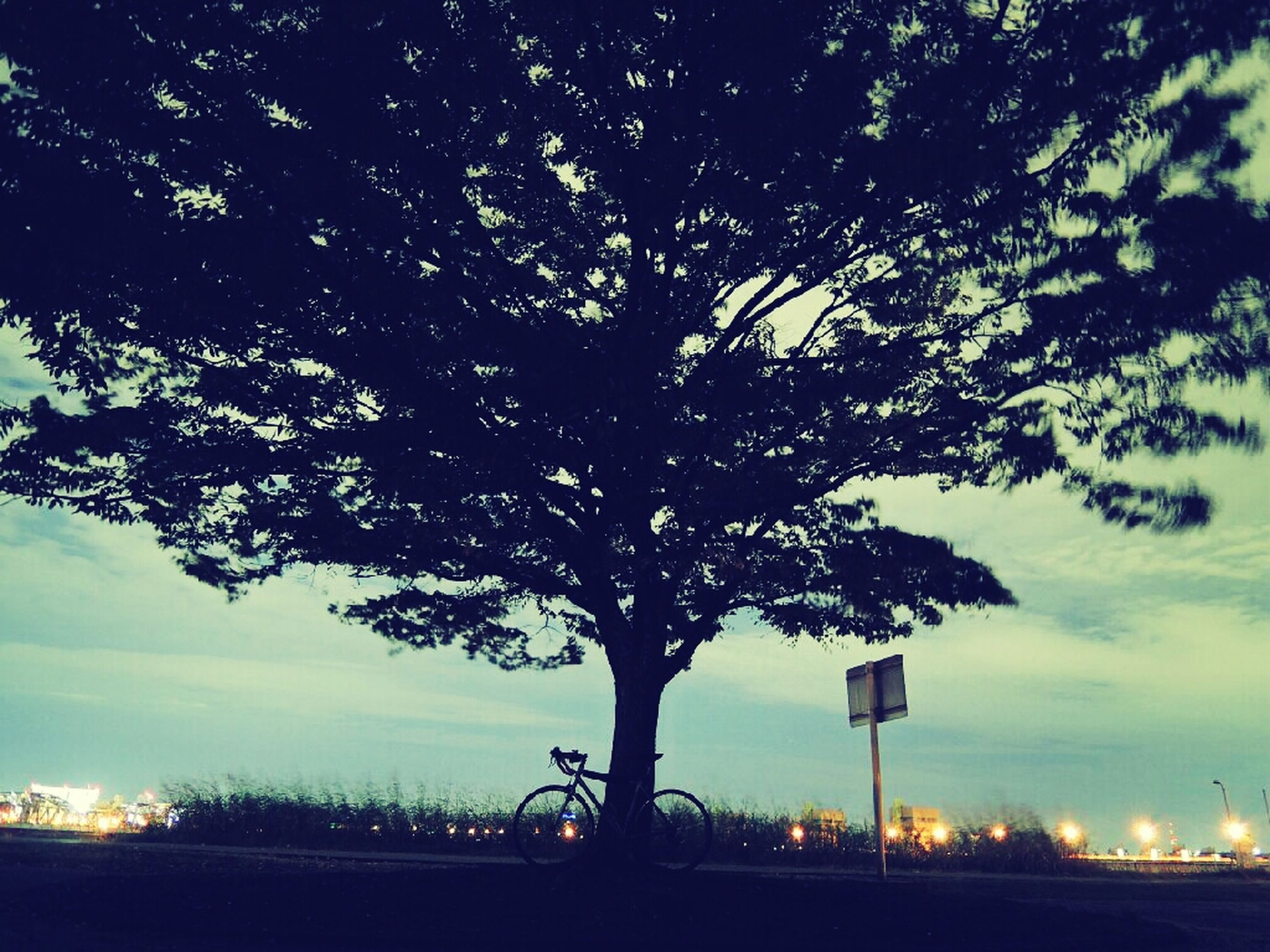 tree, silhouette, sky, tranquility, tranquil scene, nature, beauty in nature, scenics, tree trunk, sunset, branch, growth, street light, low angle view, cloud - sky, landscape, field, dusk, idyllic, outdoors