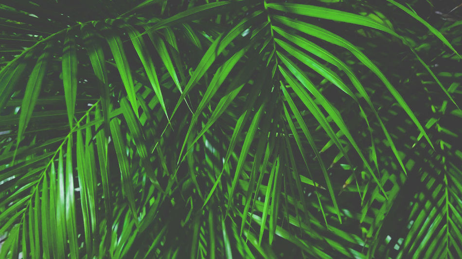50+ Palm Pictures HD   Download Authentic Images on EyeEm