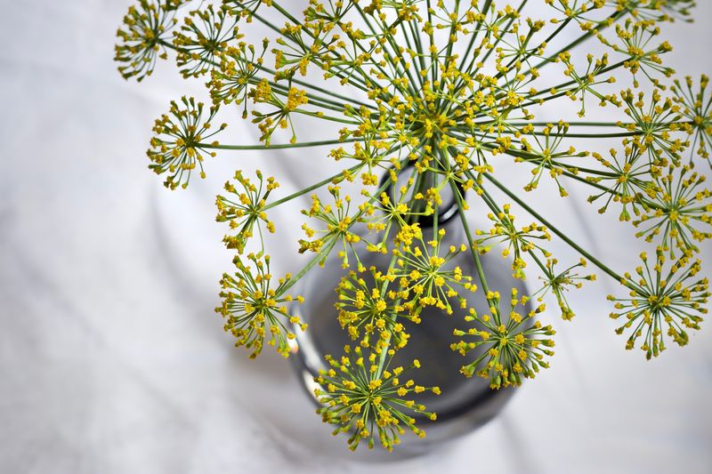 High angle view of dill weed in vase