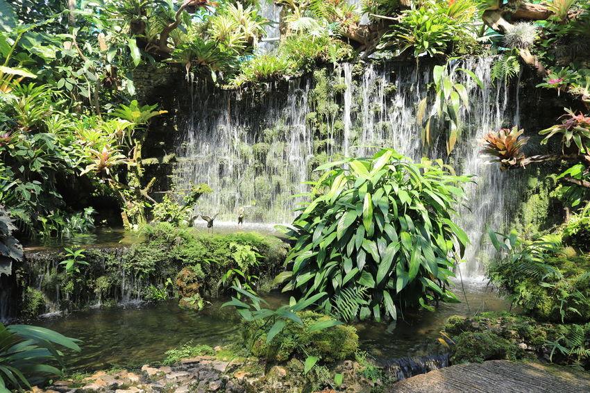 อุทยานหลวงราชพฤกษ์ Water Plant Beauty In Nature Growth Nature Tree Waterfall Motion Scenics - Nature No People Green Color Tranquility Forest Flowing Water Lake Plant Part Leaf Day Long Exposure Outdoors Flowing Rainforest อุทยานหลวงราชพฤกษ์ ราชพฤกษ์