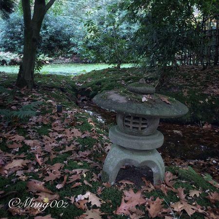 Holland Autumn Nature Leaves Fall Forest Japanese Garden Moss Stone Lantern Duckweed