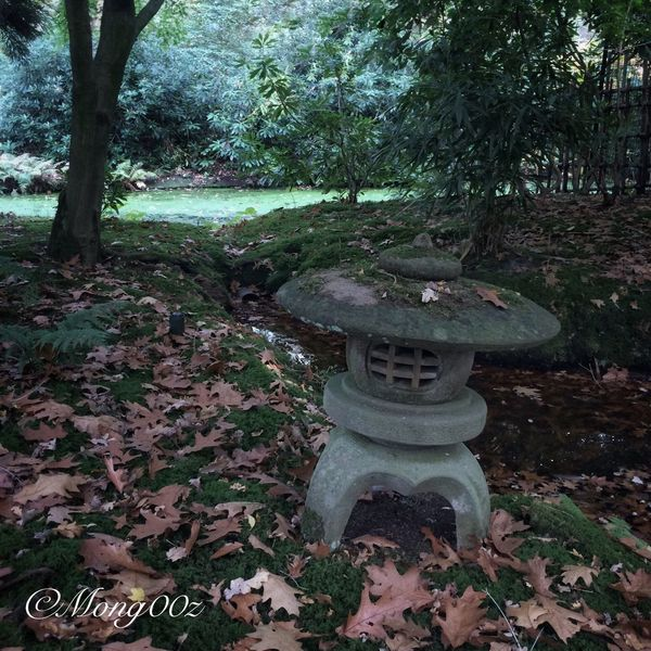 Holland Autumn Nature Leaves Fall Forest Japanese Garden Moss Stone Lantern Duckweed