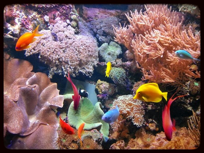 Sea Nature Animals Water_collection