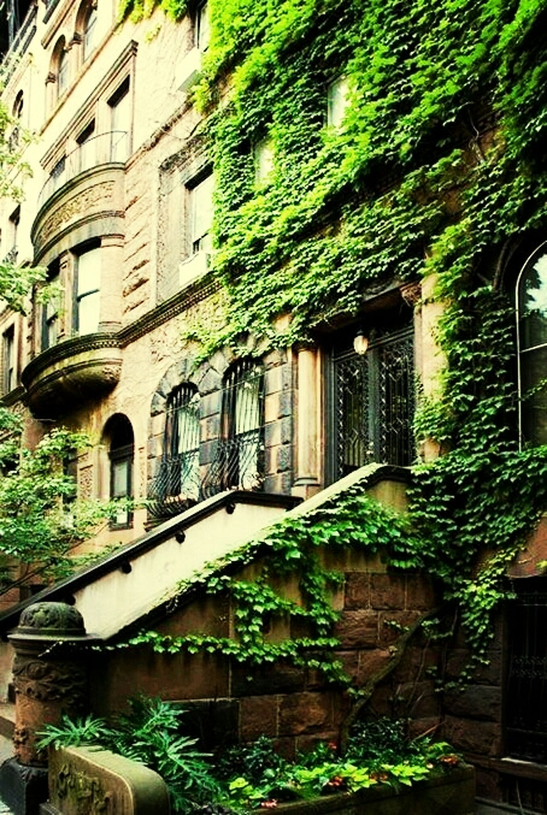 built structure, architecture, plant, building exterior, potted plant, growth, green color, house, leaf, residential building, residential structure, ivy, tree, front or back yard, building, window, creeper plant, nature, day, no people