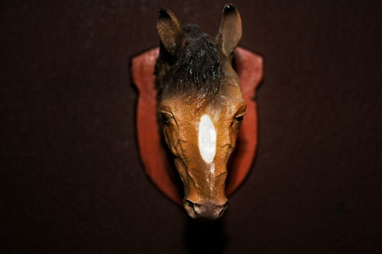 Close-up of horse taxidermy on wall