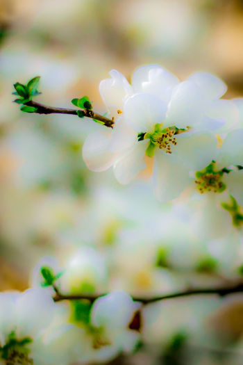White flowers blurred in the summer. Make the picture like painting water color style. Dreaming Green Color Beauty In Nature Blurred Motion Close-up Day Flower Flower Head Fragility Freshness Growth Nature No People Outdoors Painting Painting Style Water Colors White Flowers