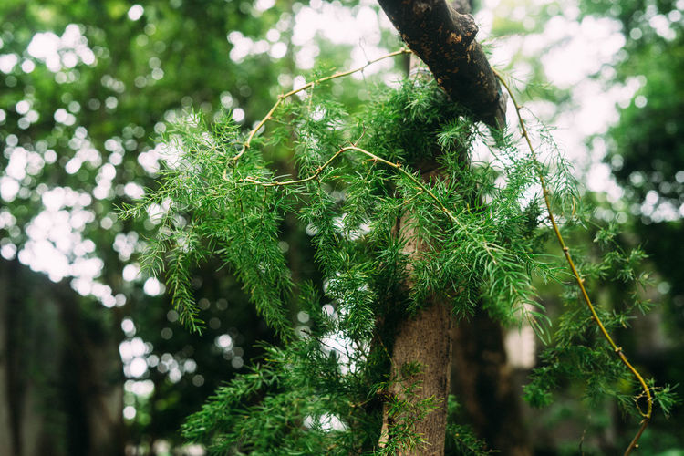Ayurveda Beauty In Nature Botany Branch Close-up Day Focus On Foreground Fragility Freshness Garden Green Color Growth Leaf Low Angle View Nature Outdoors Plant Scenics Selective Focus Shatavari Sky Tall - High Tranquil Scene Tranquility WoodLand