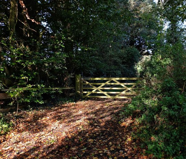 5 bar gate in the Devon Countryside 5 Bar Gate Autumn Colors Autumn Leaves Country Living Devon Gate October Path Sunlight The Week On EyeEm Autumn Colours Countryside Countryside Life Day Fall Fall Colours Five Five Bar Gate Gateway Growth Nature No People Outdoors Pathway Be. Ready.