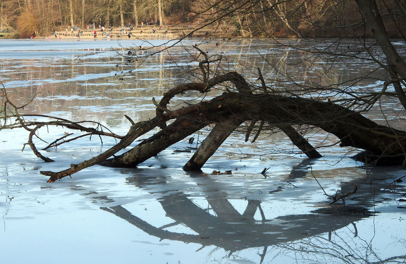 Bare tree by frozen lake during winter