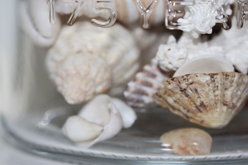 Sea shells in a jar Glass Jar Macro Photography Macro Sea Shells Shells EyeEm Selects Indoors  Close-up No People Freshness Day