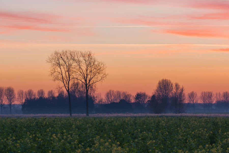 Sunset near Sint Kruis, border the Netherlands / Belgium EyeEm Market © Getty Images EyeEm Premium Collection Nature Sky Sunset The Netherlands Tranquil Scene Tree Zeeland  Zeeuws Vlaanderen