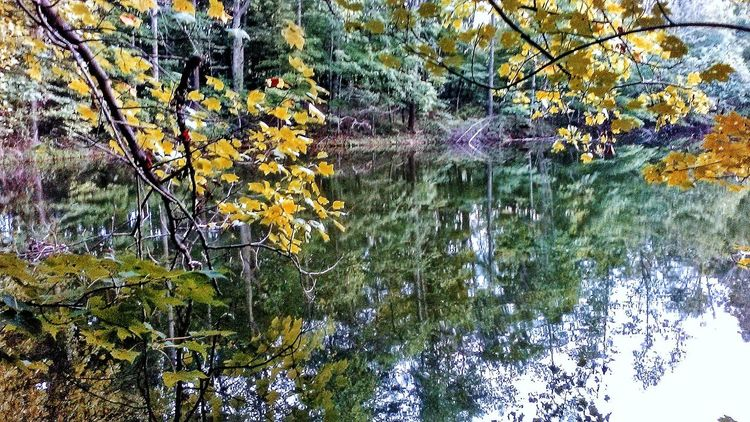Reflection Full Frame Water No People Outdoors Beauty In Nature Backgrounds Leaf Fragility Autumn In Indiana Hometown Love EyeEmNewHere Countryside Glamour Autumn Collection The Week On EyeEm Beauty In Ordinary Things Indiana Harvest