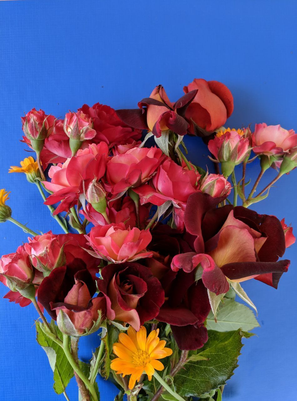 CLOSE-UP OF RED FLOWERING PLANTS AGAINST BLUE SKY