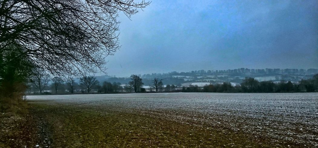 Tree Sky Nature Growth Tranquility No People Outdoors Scenics Cloud - Sky Day Beauty In Nature Eeyem Photography Atmospheric Fieldscape Cold Morning Fine Art Photography Lamdscapes Landscape Landscape_Collection Snowy Scene Cotswolds