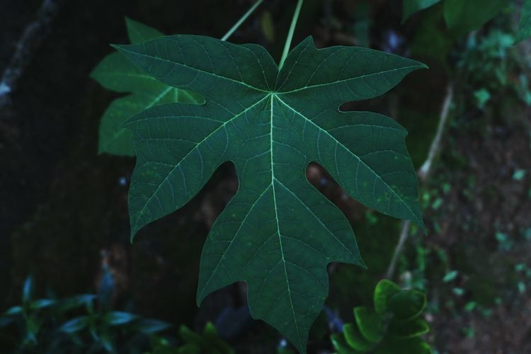 Leaf Social Issues Vine - Plant Close-up Plant Green Color