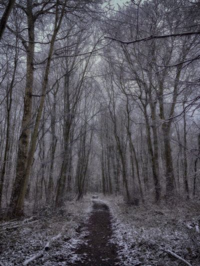 HDR Winter WelwynGardenCity Commonswood Woodland Walks Black & White